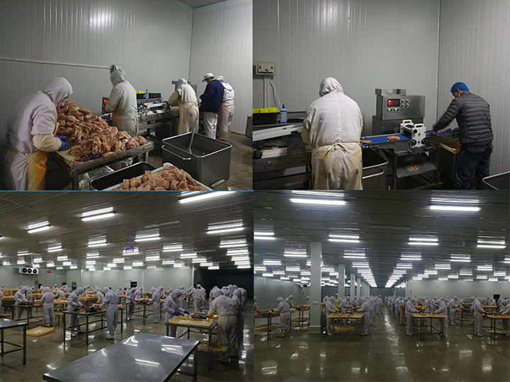 customer's fried chicken fillet processing plant