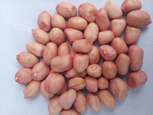 clean peanut kernels